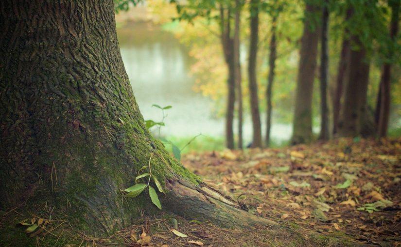 Ładny oraz {zadbany zieleniec to nie lada wyzwanie, przede wszystkim jak jego konserwacją zajmujemy się sami.